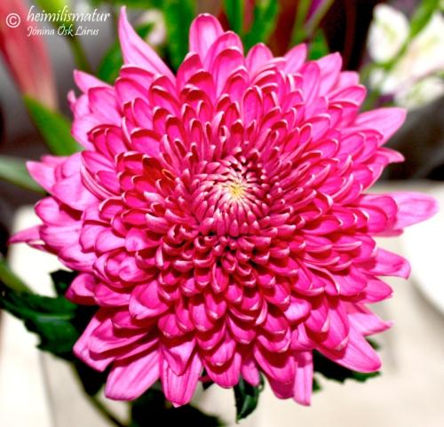 blom_1